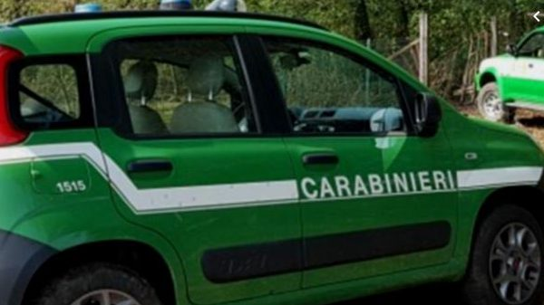 carabinieri forestale capaccio paestum