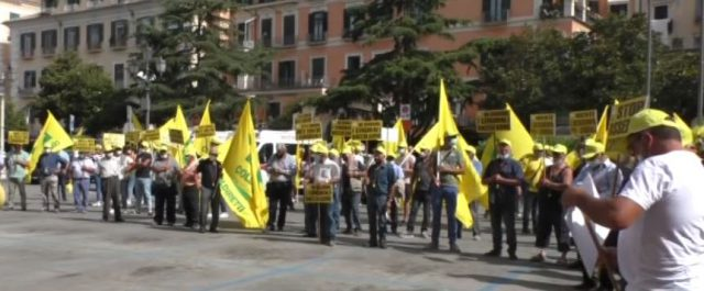 INVASIONE CINGHIALI, LA PROTESTA DEGLI AGRICOLTORI SALERNITANI